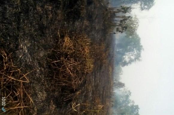 Quema de Bosque Pedeguita y Mancilla Deforestación y afectación de Fauna y Flora