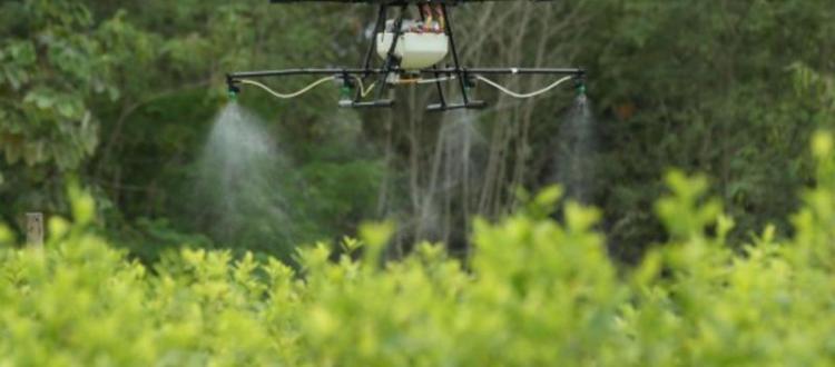 Fumigación/Glifosato/Cultivos ilícitos