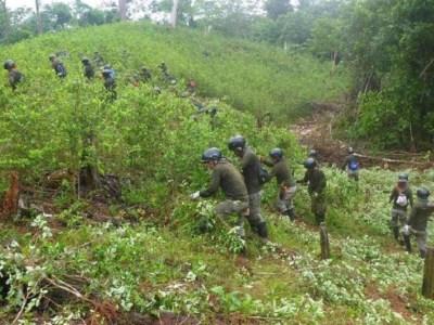 Erradicación forzosa Colombia
