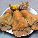 琵琶虾 Opening slipper lobster