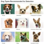 What kind of Dog can Fujifilm face detection detect ?