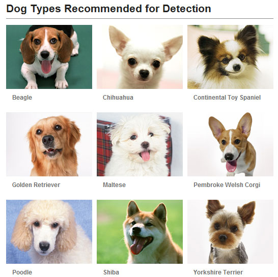 Dog Face Detection