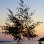 Sunset Tree beside the beach