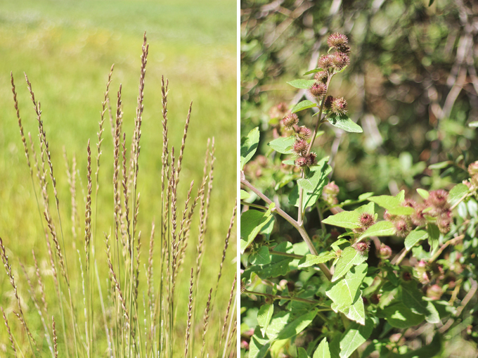 Foraged Prairie Wildflower Bouquet | Wheatgrass | Calgary, Alberta, Canada // JustineCelina.com