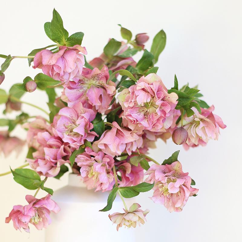 DIY | Homemade Flower Food // JustineCelina.com