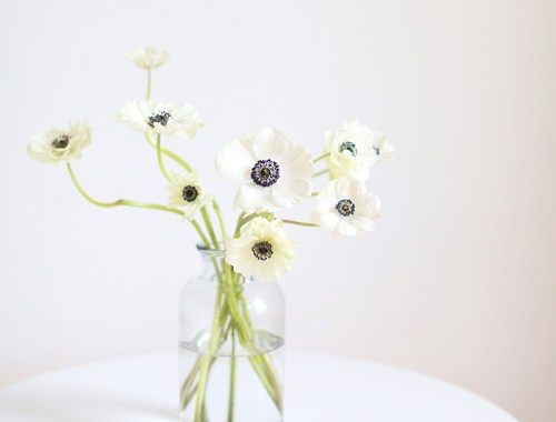 All About Anemones   The Best Anemones Care Tips   Panda Anemones // JustineCelina.com
