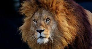 parador de San Marcos león