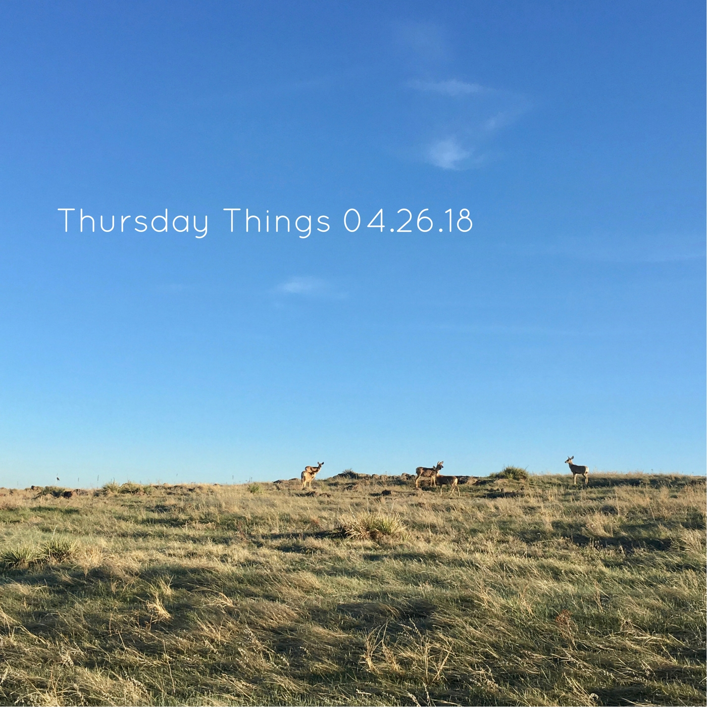 Thursday Things 04.26.18