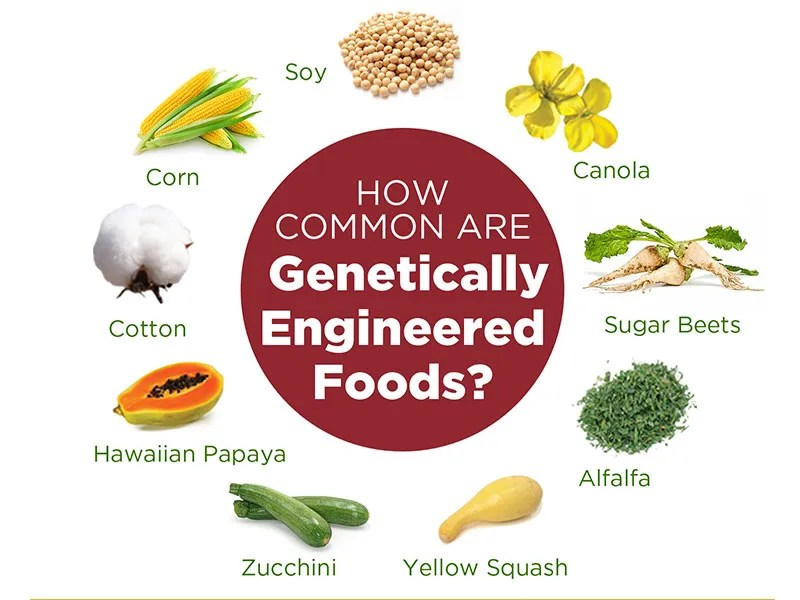 Difference Between Organic And Genetically Modified Foods