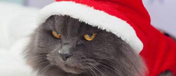20141224_santa-cat_59262874
