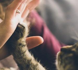 huisdier verliezen