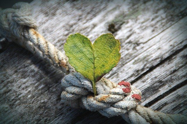 heart shaped growing from knotted rope