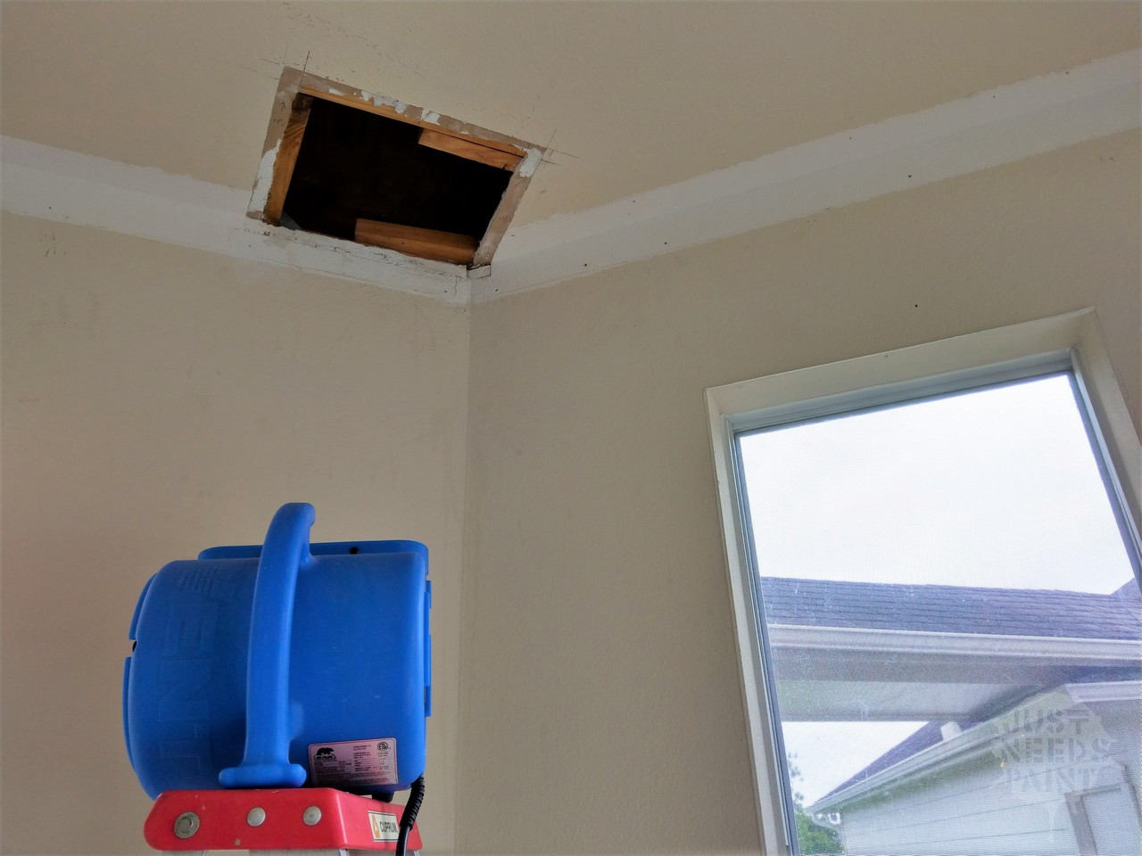 The True Cost of Small Drywall Repair for Bee Removal - Just
