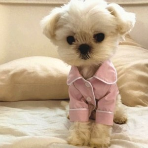 Cute Pink Dog Pet Fashion Pajamas