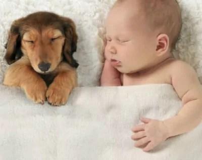 10 fotos provam que a amizade entre cachorros e crianças é puro amor