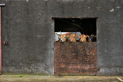 Graham's Dairy