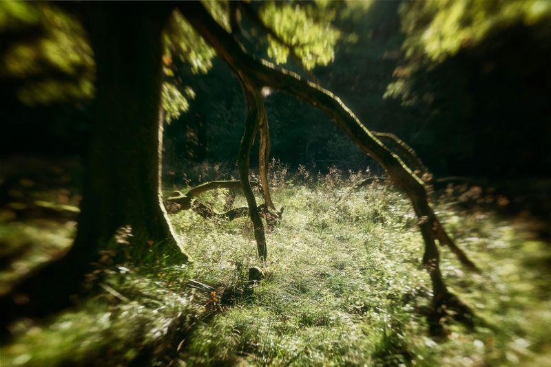 blur-tree-dyrehaven