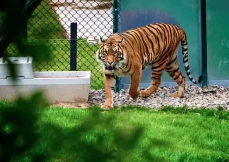 Kamla Nehru Zoological Garden Kankaria, Ahmedabad