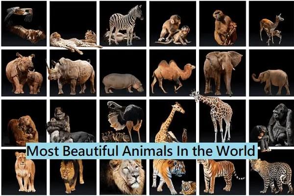 World's Most Beautiful Animals