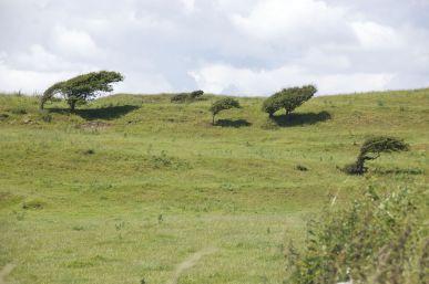 De bomen verklappen hier wel waar de wind meestal vandaan komt...