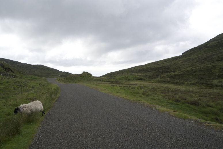 smalle weggetjes, dreigende wolden, groen en schapen die voor je wielen wegspringen, de rust van Schotland.