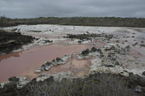 zoutwinnin bij Puerto Ayora