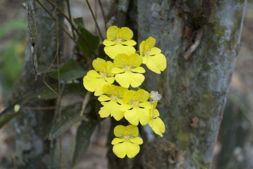 We zien prachtige gele orchideetjes, die onze gids ook voor het eerst ziet.