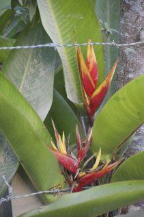 prachtige plant in Mindo