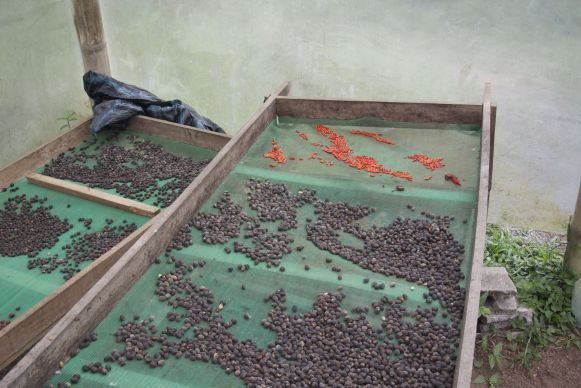 Chocoladetour bij El Quetzal in Mindo