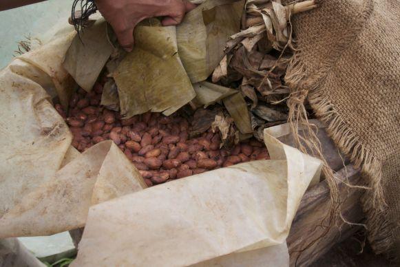 Fermenterende cacaobonen