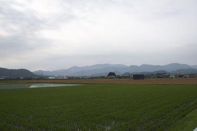 De uitzichten over de rijstvelden bieden een blik op de heuvels en bergen die we vandaag nog niet bereiken.