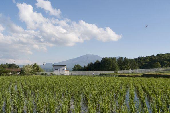 Vulkaan en rijstvelden