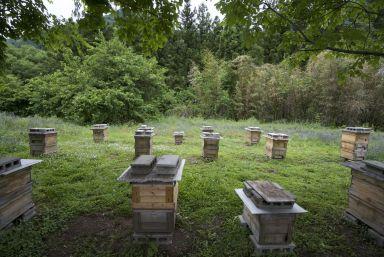 Bijenkasten van de buren van de bakker.
