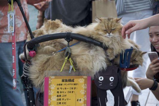 Het levende uithangbord van één van Tokyo's cat cafés