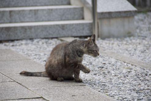 Verschillende katten lopen rond bij de schrijn