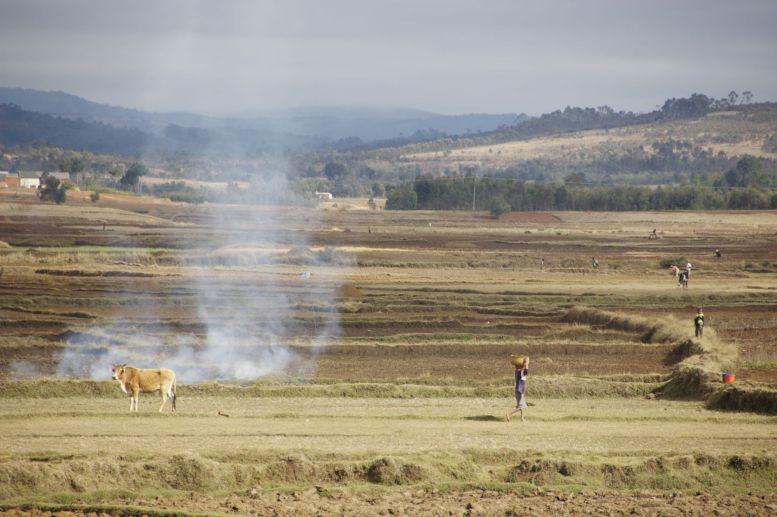 Toch iets anders dan de boeren velden in Nederland.