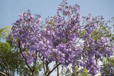 Ik houd zo van bomen in bloei.