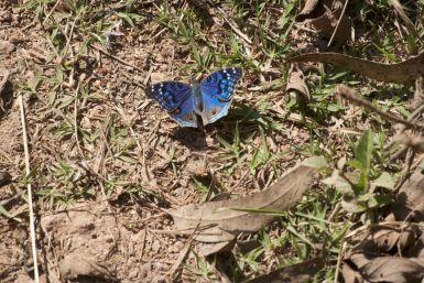 Prachtige kleur van de vlinder.