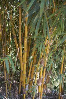 De bamboe heeft zo'n mooi streepjespatroon.