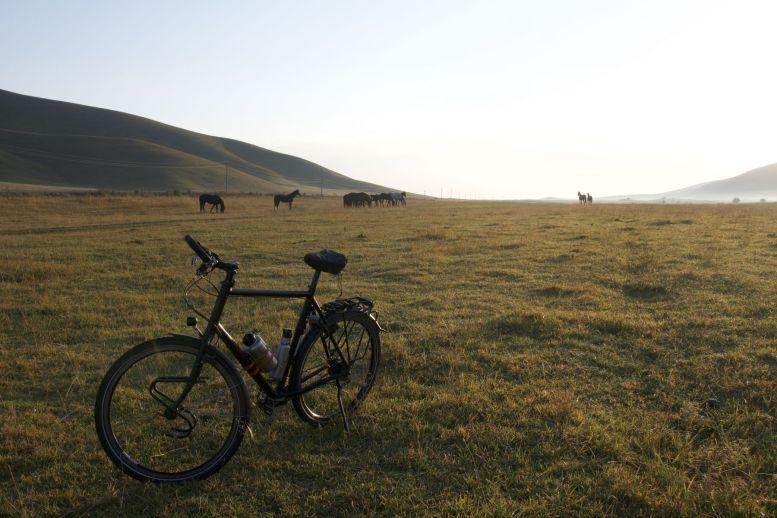 Onze aluminium rossen hebben het veldje vannacht weer gedeeld met echte paarden.