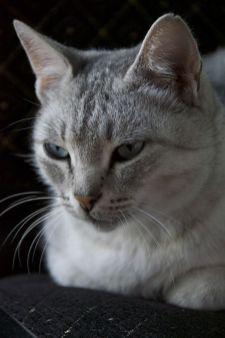 De katten willen hun domein wel delen bij Turgen Hostel.