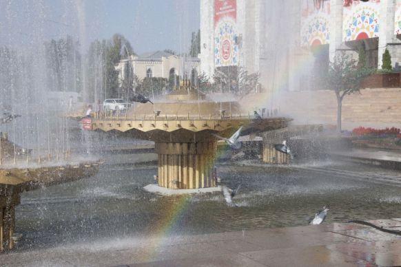 Voor een extra zoet plaatje vliegt er net een duif door de regenboog.