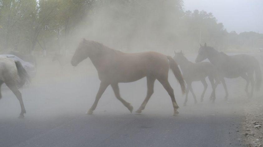 Nee dit is niet langs de grote weg. Daar zien we nog steeds wel veel vee, maar dan met name achterin vrachtauto's of pickups.