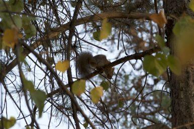 We zien deze vakantie zo weinig wilde dieren, dus maar een tweede eekhoorn foto!