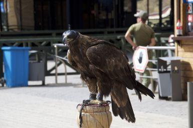 Bij een van de kabelbaan tussenstations eten we op een zeer toeristische plek. Je kunt je op de foto laten zetten in traditionele kleding met een adelaar. Ik fotografeer liever de gigantische vogel los.