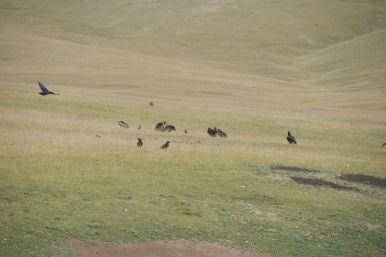 De gieren en kraaien hebben een karkas gevonden. Soms zie je de karkassen eerst, soms ruik je ze eerst....