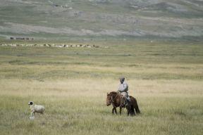 Ik denk dat deze herder een tweede paard aan het opleiden is?