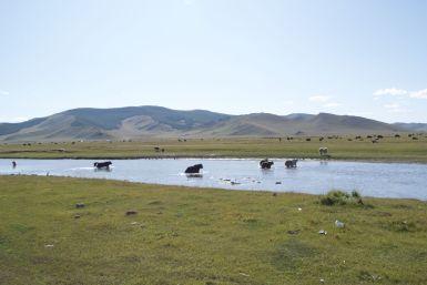 Als we staan te kijken naar de yaks die de rivier oversteken komt er een auto aan, die hebben zojuist Jur's zonnebril gevonden.