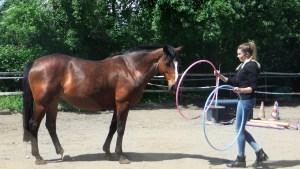 Pferdegestütztes Coaching eine bereichernde Erfahrung