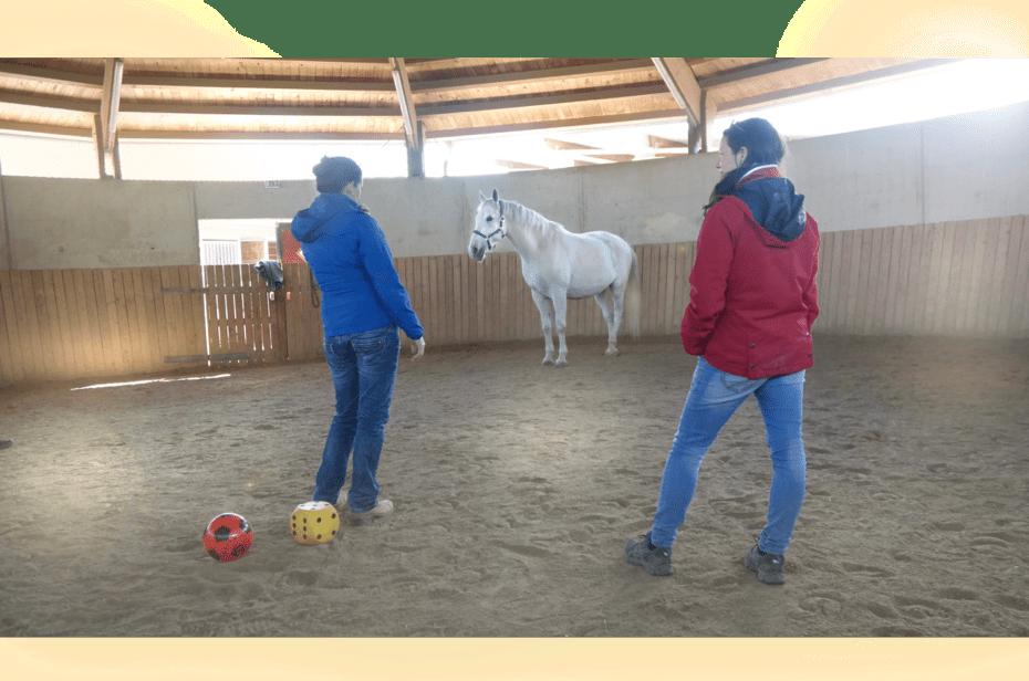 Ausbildung Horse Assisted Coach Pferdegestütztes Coaching Franziska Müller